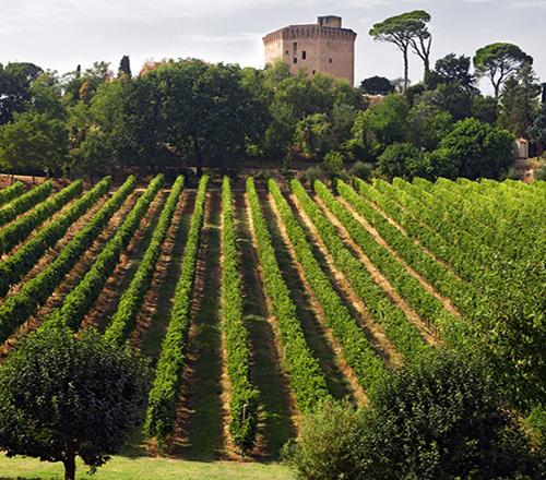Forlì Verde