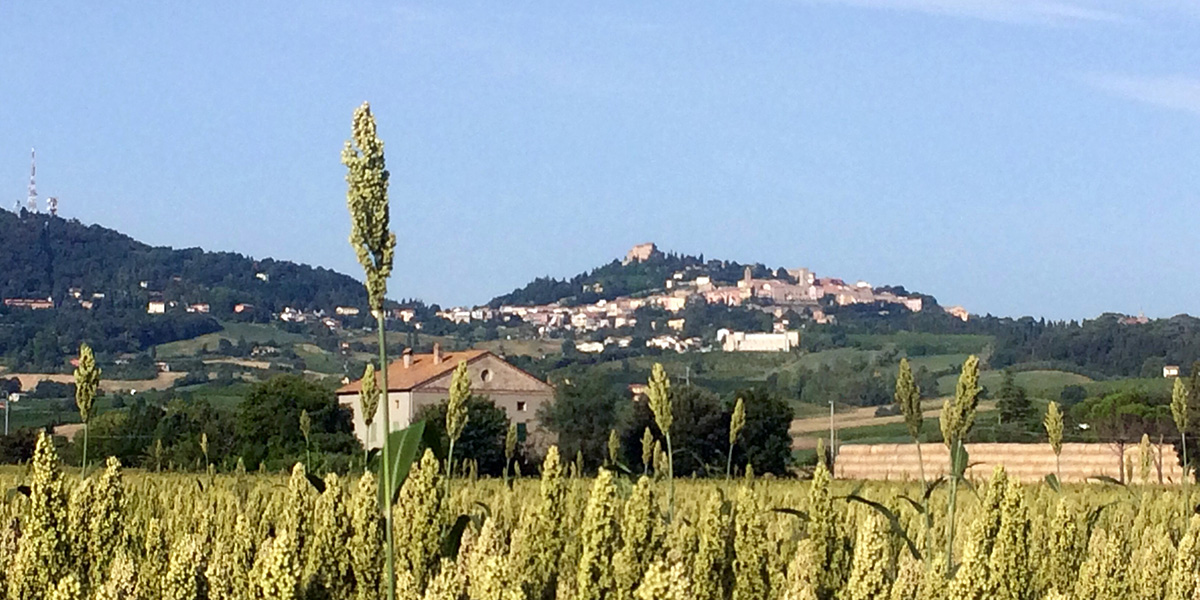 Spungone Romagna
